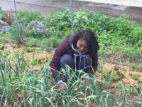 person is standing and a woman is squatting in a garden of onions.